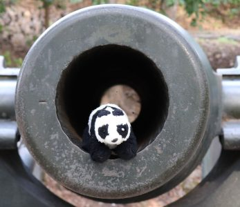 Hunter the Traveling Panda